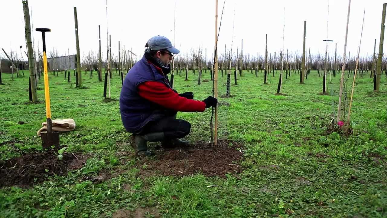 Jardin comment tailler sa vigne mega tuto tous les for Tous pour le jardin
